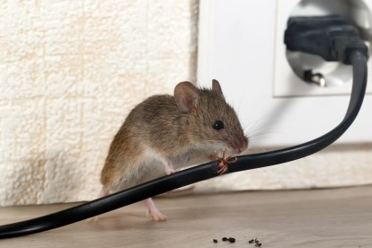 Pest Control in Hanwell, W7. Call Now! 020 8166 9746