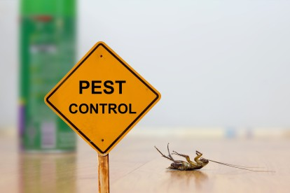 Pest Contol in Hanwell, W7. Call Now 020 8166 9746